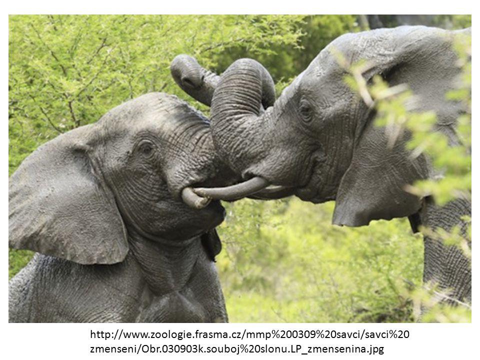 http://www.zoologie.frasma.cz/mmp%200309%20savci/savci%2 0zmenseni/Obr.030903i_zmensenina.jpg