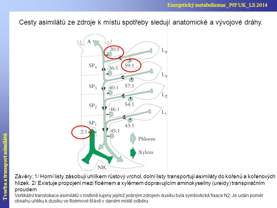 Distribuce asimilátů v rostlině – praktické využití Zvýšit výnos neznamená zvětšit rostlinu ale upravit alokaci asimilátů.