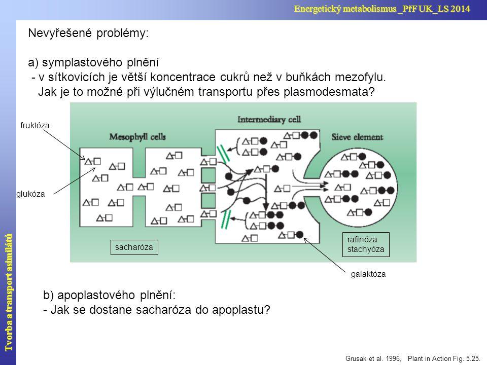 sacharózo-protonový symportér v membráně průvodní buňky Komplex sítkovice-průvodní buňka Tvorba a transport asimilátů Energetický metabolismus _PřF UK_LS 2014