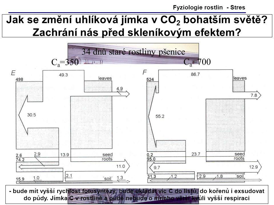 ... natural forest CO 2 enrichment  Ch Körner