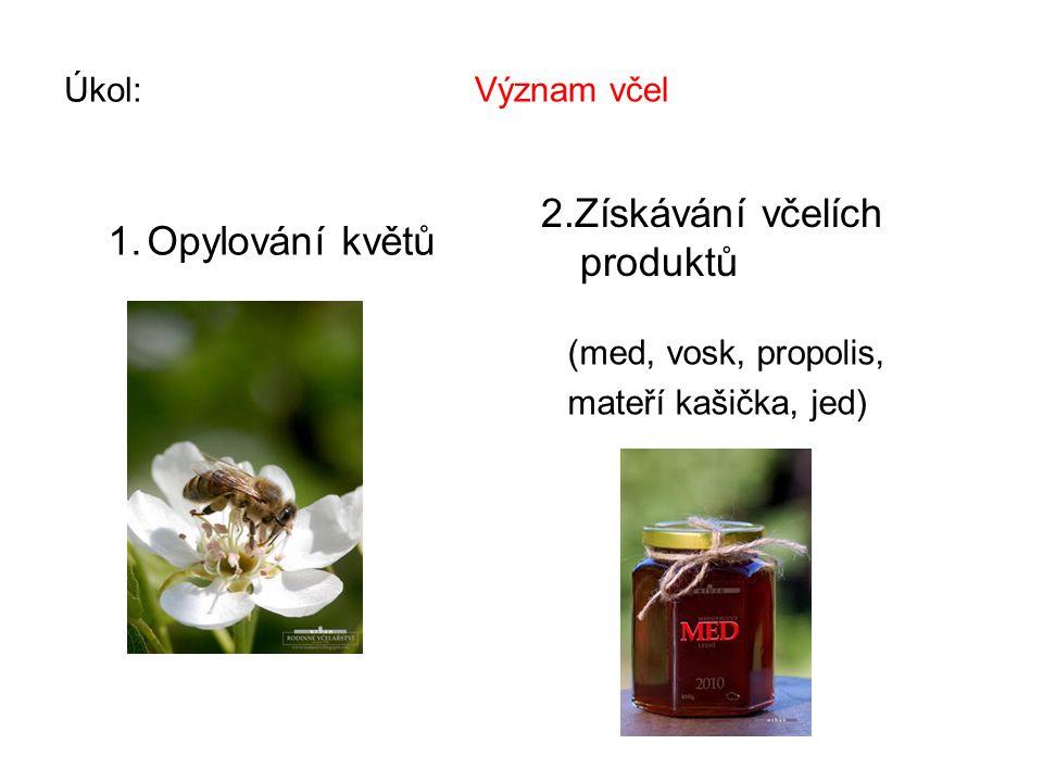 1.Z kterých částí se skládá tělo včely. 2. K čemu slouží poslední pár končetin včel.