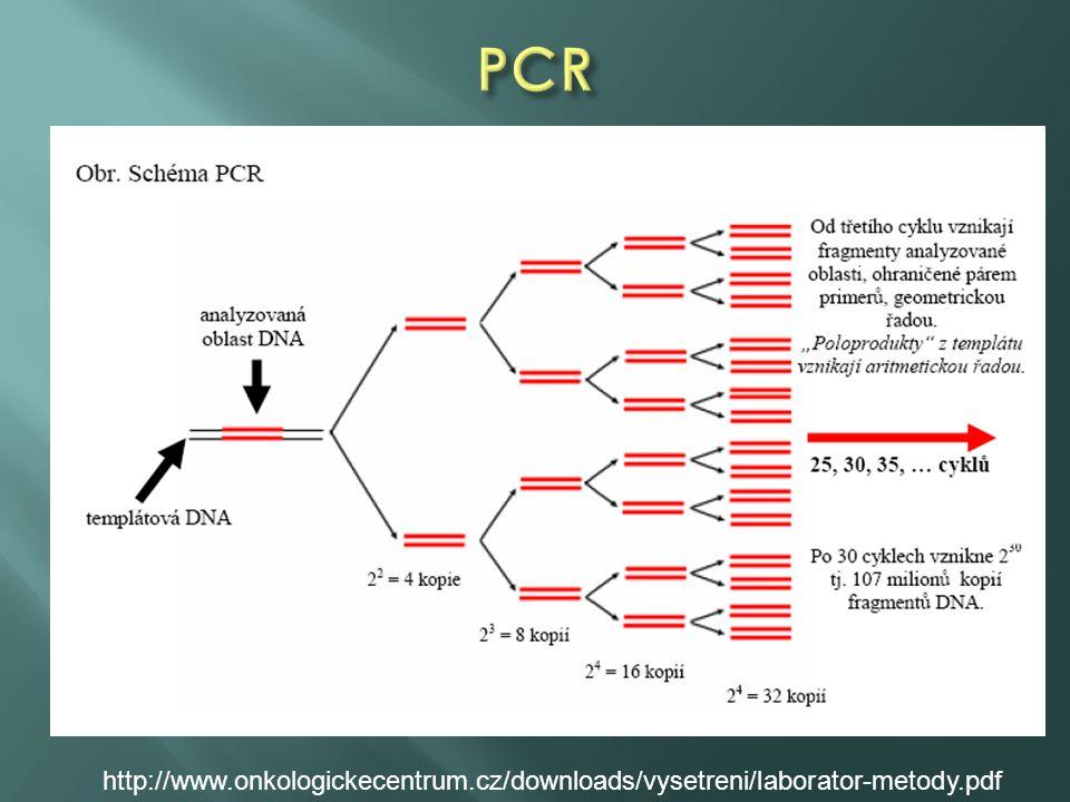 DNA/RNA izolace DNA amplifikace (pokud izolace RNA, 1. krok je RT PCR) Elektroforéza