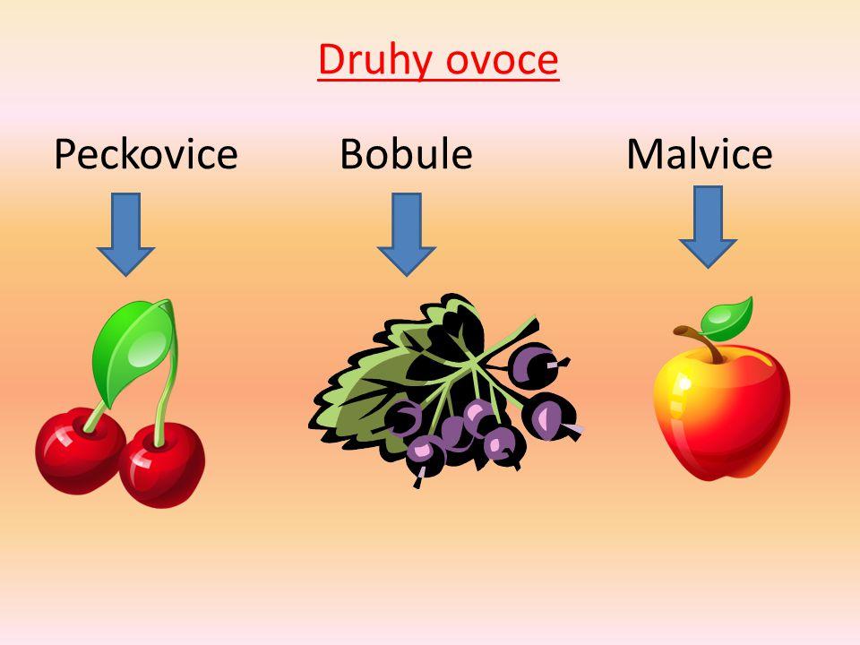 Peckovice- uvnitř plodu je jedno semeno v tvrdé pecce. třešeň švestka meruňka broskev