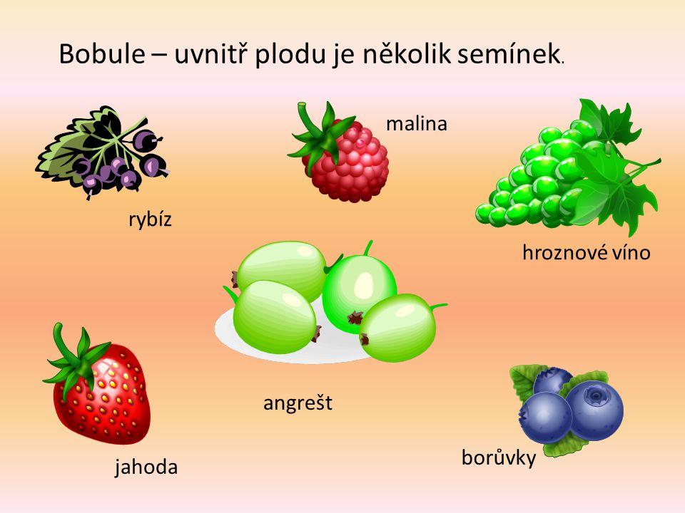 Malvice – uvnitř plodu jsou semena v jádřinci. jablko kdoule hruška