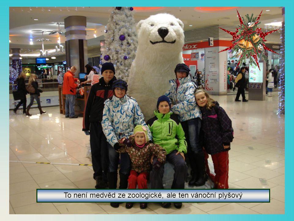 To není medvěd ze zoologické, ale ten vánoční plyšový