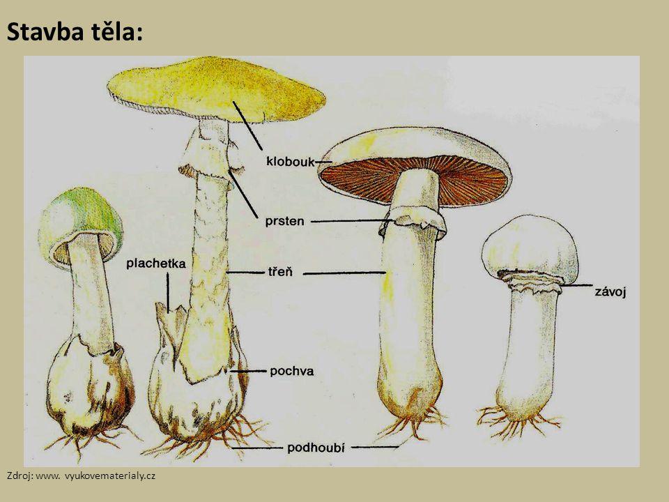 Využití hub člověkem Houbaření Nebezpečí jedovatých hub Potravinářské technologie (zejména v pekařství a při výrobě alkoholických nápojů) Farmaceutický průmysl – antibiotika Potravinářský (plísňové sýry)