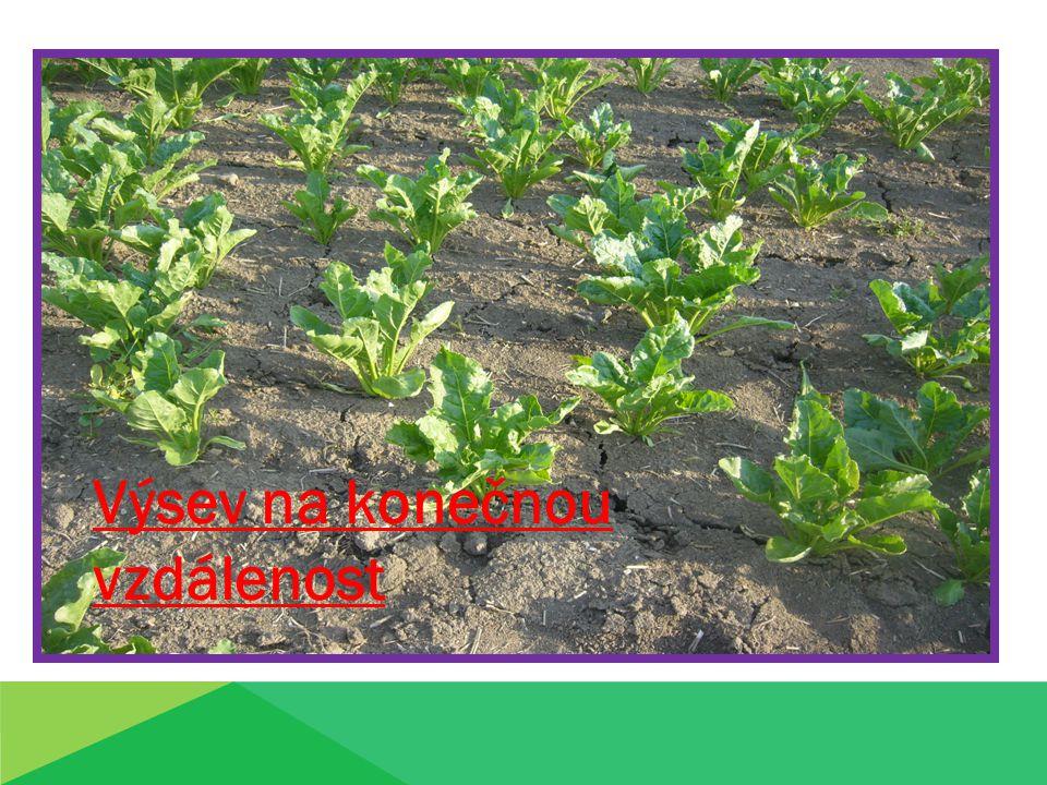 Výsev osiva na poloviční vzdálenost