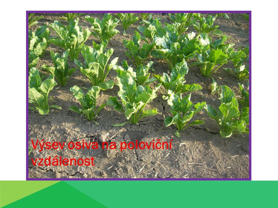 Správný výsev:  utužené výsevní lůžko  dostatečně provzdušněná překrývající vrstva půdy  přesnost rozmístění semen v řádku – bez mezer a shluků Mezera = neobsazený úsek větší než 0,40m Mezerovitost = podíl mezer na délce řádku ( do 5%) Shluk= řepy od sebe vzdálené méně než 0,16m % podíl shluků= 2 – 3%