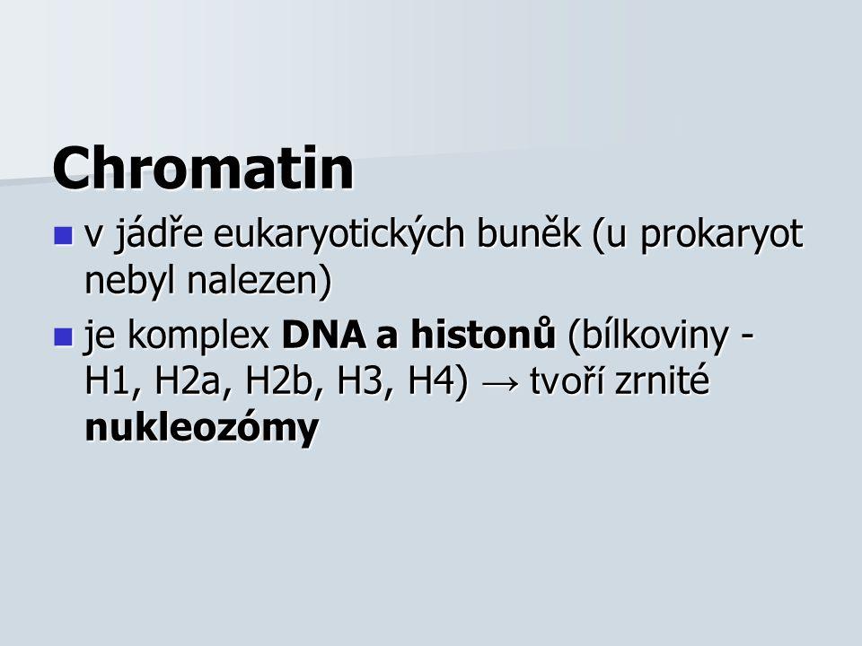 Stavba nukleozómu: Stavba nukleozómu: –histony H2a, H2b, H3, H4 vytváří jádro nukleozómu → obtočeno DNA –nukleozómy spojeny vláknem DNA, které prochází histonem H1