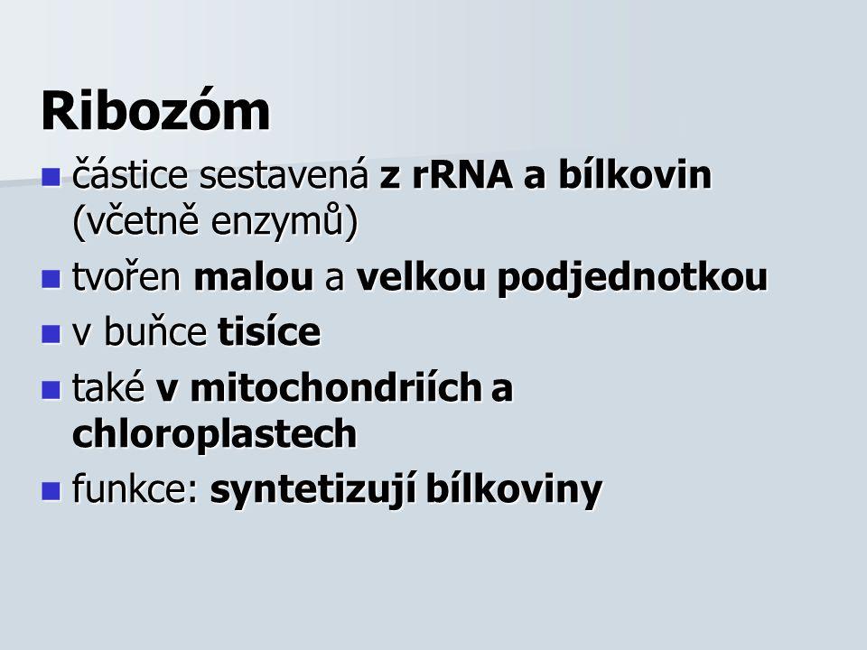 Chromatin v jádře eukaryotických buněk (u prokaryot nebyl nalezen) v jádře eukaryotických buněk (u prokaryot nebyl nalezen) je komplex DNA a histonů (bílkoviny - H1, H2a, H2b, H3, H4) → tvoří zrnité nukleozómy je komplex DNA a histonů (bílkoviny - H1, H2a, H2b, H3, H4) → tvoří zrnité nukleozómy