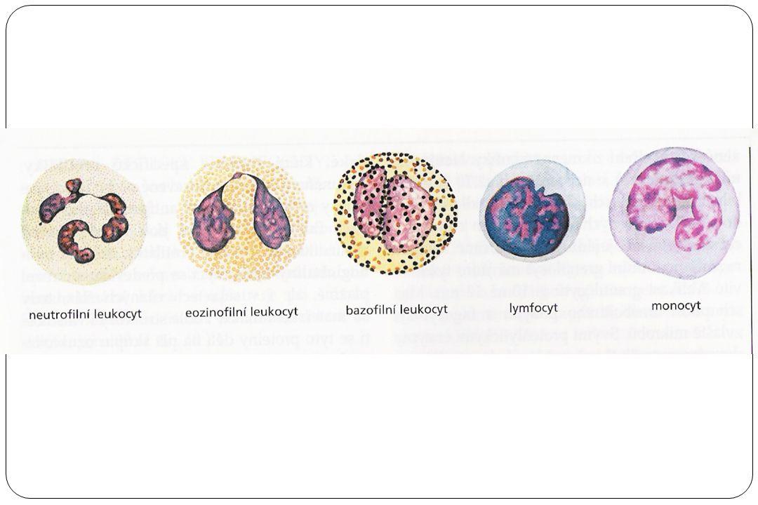 Krevní destičky – trombocyty nejmenší krevní tělíska (2-4 µm) nepravidelného tvaru bez jádra Krevní buňky