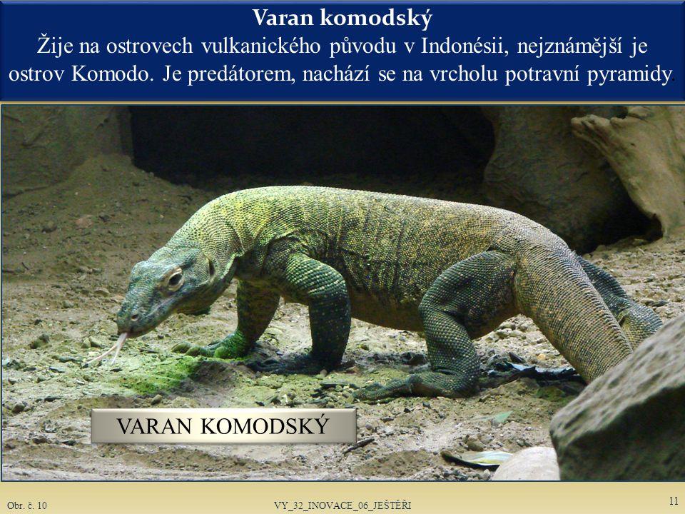 Chameleoni se vyskytují v mnoha poddruzích.