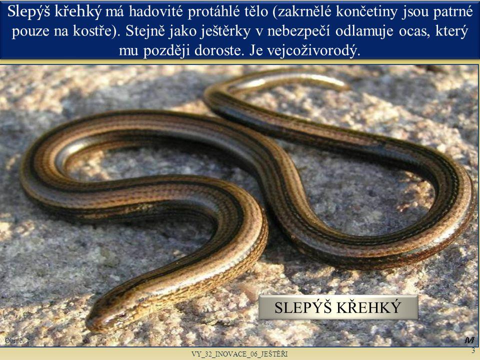 Na rozdíl od hadů mají slepýši třetí oční víčko – mžurku.