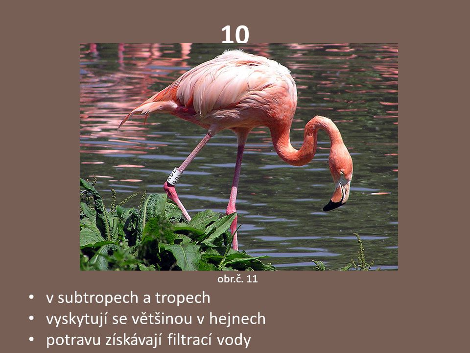 Správné odpovědi: 1 - emu 2 - kakadu 3 - kasuár 4 - hadilov písař 5 - ara 6 - kivi 7- pelikán 8 - kondor 9 – kolibřík 10 - plameňák