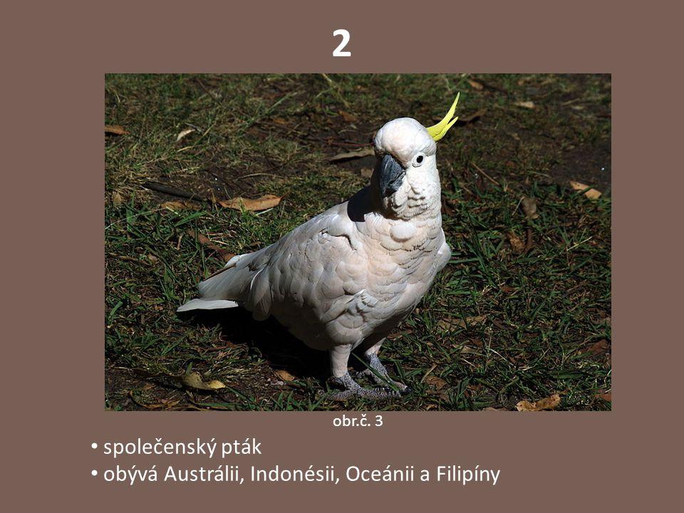 3 v deštných lesích, výjimečně v parcích na vejcích sedí samec, který i vodí mláďat obr.č. 4
