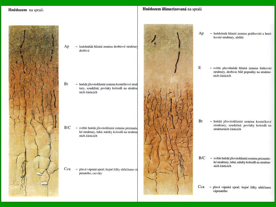 Illimerizované půdy (Albic Luvisol) Jsou značně rozšířené ve středních výškových stupních, zejména v pahorkatinách a vrchovinách Podnebí je již značně humornější, roční úhrn srážek kolísá v rozmezí 550-900 mm, prům.roční teplota se pohybuje mezi 6 až 8°C Tyto půdy vznikaly převážně pod kyselými doubravami a bučinami Matečným substrátem jsou nejčastěji sprašové hlíny, středně těžké glaciální sedimenty, smíšené svahoviny atd.