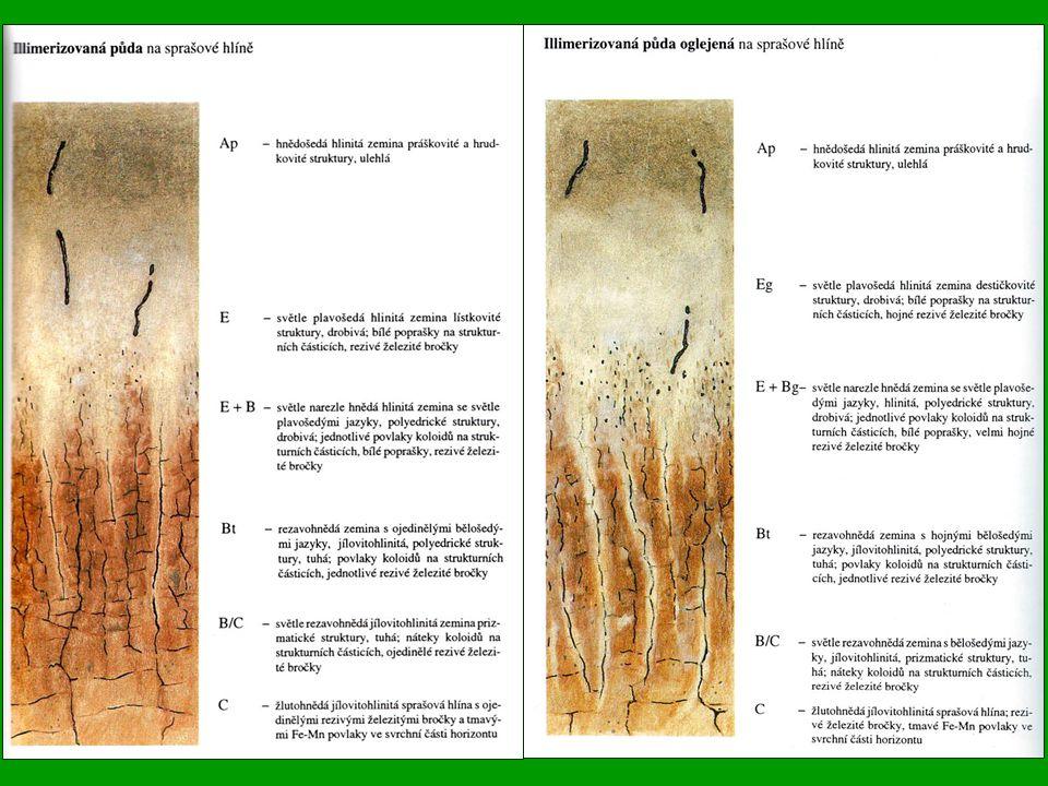 Hnědé půdy (Eutric Cambisol) Jsou našim nejrozšířenějším půdním typem.