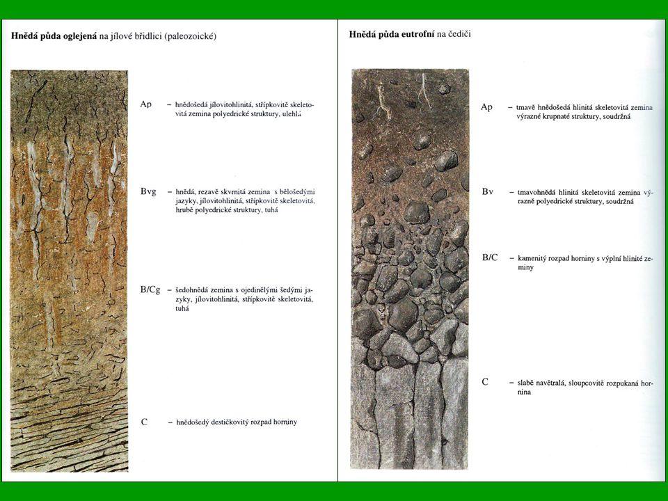 Rendziny (Rendzina) Vytvářejí se na silně karbonátových horninách – vápencích a dolomitech Nacházejí se ve všech klimatických pásmech, pokud je splněn požadavek vápnitosti horniny.V ČR jsou nejrozšířenější v pahorkatinách Původními porosty především šípákové a teplomilné doubravy až skalní stepy, ve vyšších polohách vápnomilné bučiny až reliktní bory.