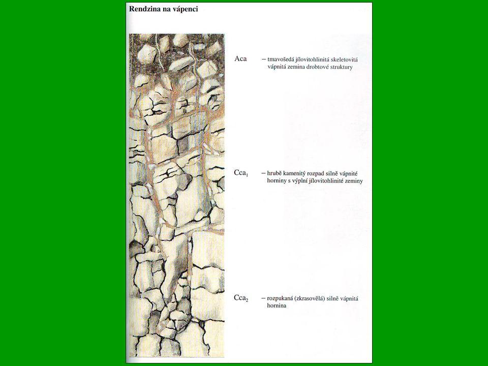 Nivní půdy (Eutric Fluvisol) V ČR všeobecně rozšířeny, na větších plochách zejména v nížinách, vyplňují plochá dna říčních údolí, zvláště podél větších toků Původními porosty byly lužní lesy, druhotnými údolní louky Půdotvorným substrátem jsou výhradně nivní uloženiny /říční náplavy/ Nivní půdy jsou vývojově velmi mladé - půdotvorný proces je často, nebo do nedávna byl, periodicky přerušován akumulací zeminného, do značné míry prohumózněného materiálu, ukládaného při záplavách Statigrafie nivních půd je velmi jednoduchá - pod nevýrazným humusovým horizontem leží přímo matečný substrát, tvořený naplaveným materiálem, Barva celého profilu obvykle hnědá nebo šedohnědá Zrnitostní složení silně kolísá v závislosti na rychlosti toku a na vzdálenosti od řečiště; nivy bystrých toků a partie přiléhající k řečišti jsou většinou lehčí a naopak.