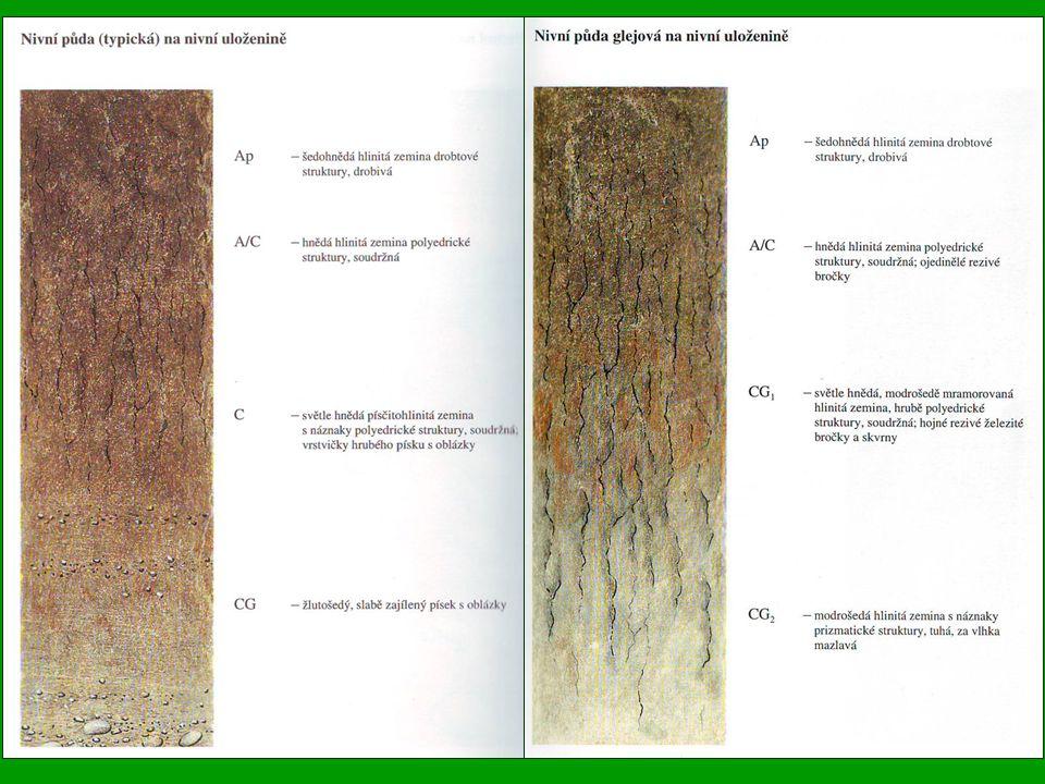 Gleje (Dystric Gleysol) Rozšířeny po celém území ČR, hlavně v nivách vodních toků a v zamokřených úpadech, jsou to půdy s výraznými znaky zamokření podzemní vodou Centrem jejich rozšíření je pahorkatina a vrchovina, původními porosty byly luhy, druhotnými zamokřené kyselé louky Substrátem jsou hlavně nevápnité nivní uloženiny a deluviální plachy Hlavním půdotvorným procesem je glejový pochod Pod mělkým humusovým horizontem, někdy zrašelinělým, leží zajílený mazlavý glejový horizont, trvale ovlivněný vysokou úrovní hladiny podzemní vody, vytvořil se při redukčních pochodech, probíhajících při trvalém zamokření a za přítomnosti většího množství organických látek Obsah slabě přeměněných organických látek bývá značně vysoký, reakce je silně kyselá; sorbční i fyzikální vlastnosti jsou krajně nepříznivé Trvale vysoká hladina podzemní vody znemožňuje využívání glejových půd pro pěstování polních plodin Gleje jsou ze zemědělského hlediska méněcenné, bývají využity převážně jako louky nevalné kvality