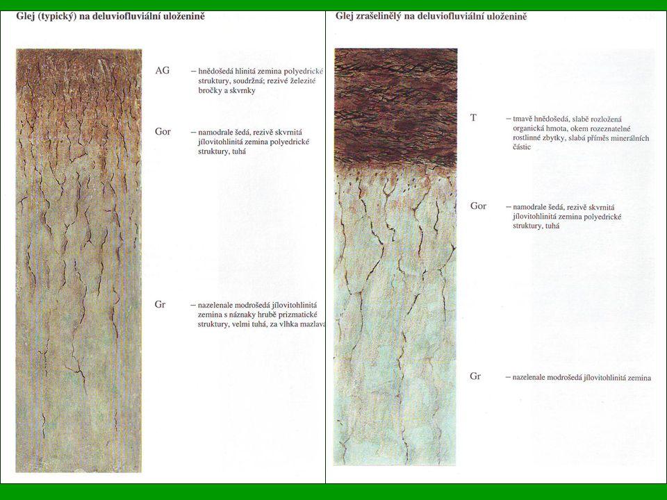Zastoupení genetických půdních typů na zemědělské půdě ČR v % Nasycené hnědé půdy 21,5 Hnědozemě 15,9 Černozemě 12,6 Kyselé hnědé půdy 10,7 Nivní půdy 7,8 Illimerizované půdy 11,5 Rendziny 3,1 Glejové půdy 7,0 Oglejené půdy 6,3 Lužní půdy 2,1 Podzolové půdy a podzoly 0,7 Drnové půdy 0,5 Nevyvinuté a ostatní půdy 0,3