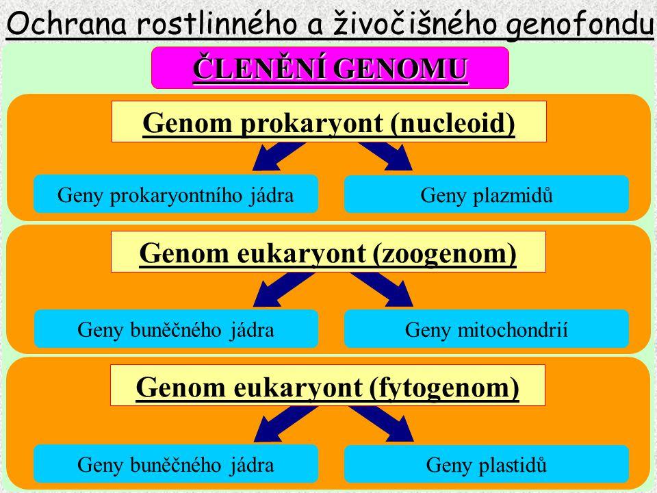 Ochrana rostlinného a živočišného genofondu Mikrosatelity DNA kódující tRNA a některé histony DNA kódující proteiny DNA v jené kopii Minisatelity Telomerové repetice Satelitní repetice SINE short LINE long Jaderná DNA Nekódující DNA Repetitivní DNA Tandemová opakování Rozptýlené repetice Členění eukaryontní DNA Představuje rozčlenění nukleotidových sekvencí do jednotlivých skupin podle charakteru jejich uspořádání a funkce