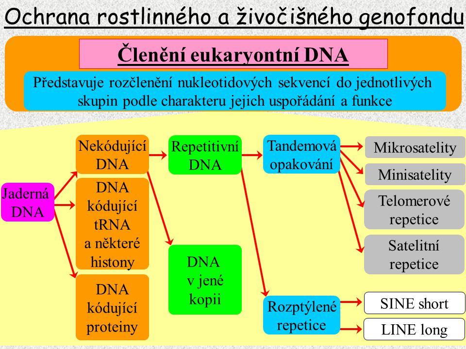 Horní hranice pro spekulaci 100 000 (10 -5 mutační rychlost pro gen a generaci) Ochrana rostlinného a živočišného genofondu Poznávání lidského genomu (HUGO) Rok 2000 Reálný prezentovaný počet genů řádově 25 000 tj.