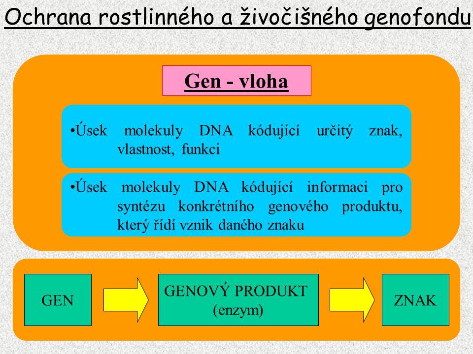 Ochrana rostlinného a živočišného genofondu Genotyp Sestava alel na konkrétním lokusu Alela Forma existence genu Jedinec nesoucí na svých chromozomech stejnou, nebo různou sestavu alel Homozygot, heterozygot Soubor všech alel u konkrétního jedince