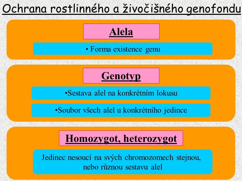Ochrana rostlinného a živočišného genofondu Genom Soubor všech genů (alel) v jedné haploidní sadě Soubor všech genů v gametě (pohlavní buňce) U prokaryont (bakterie, viry) soubor všech genů buňky