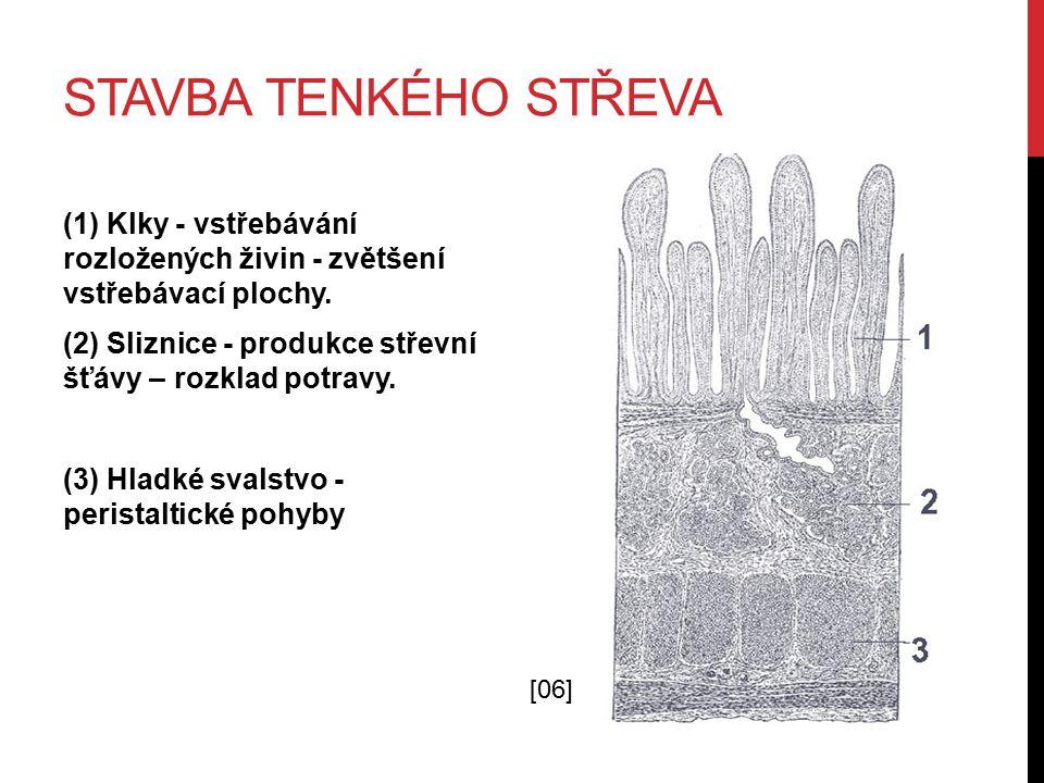 6.SLINIVKA BŘIŠNÍ Umístění: V levé části dutiny břišní za žaludkem.