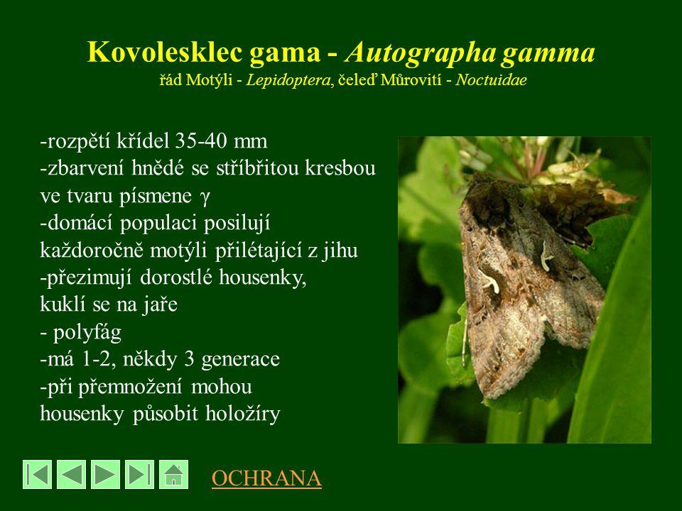 Osenice polní - Agrotis segetum -rozpětí křídel 27-40 mm -zbarvení světle až tmavě hnědé -má 2 generace: motýli 1.