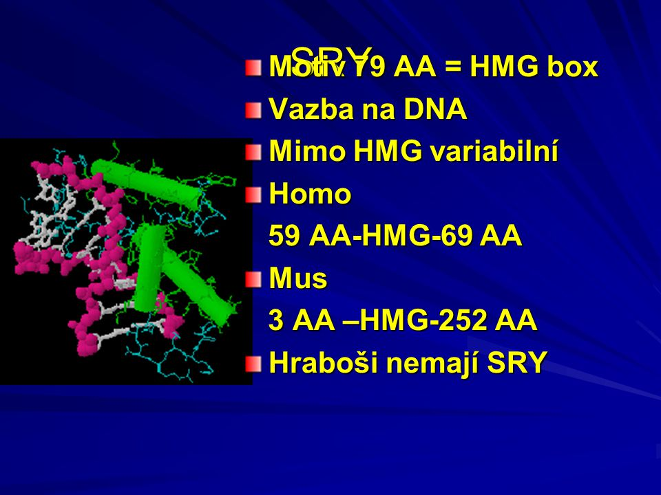 Lidský Y chromozom 78 genů 3 – exprese v mozku Původně měl savčí Y asi 1000 genů Rozpad bez možnosti rekombinace s X 8 palindromů (3 Mbp) chrání důležité geny Opraví každou generaci 600 mutací na Y