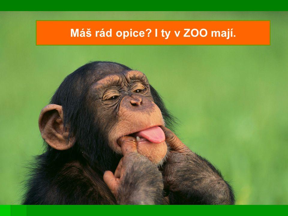 Opice jsou veselé. Rády si hrají.