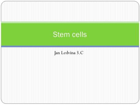 Jan Ledvina 3.C Stem cells. Definition Stem cells are prime undifferentiated cells which have two main abilities. 1. They are immortal 2. They are undiferentiated.