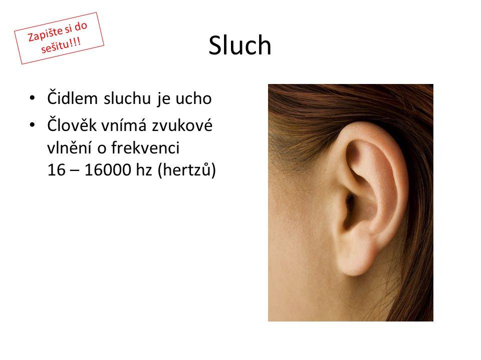 Stavba ucha: Zevní ucho - zachycuje zvuk – ušní boltec a zvukovod Střední ucho - zesiluje zvuk – bubínek a sluchové kůstky: kladívko, kovadlinka a třmínek Vnitřní ucho – tři polokruhovité kanálky, předsíň a hlemýžď – čidlo sluchu je uloženo v hlemýždi.