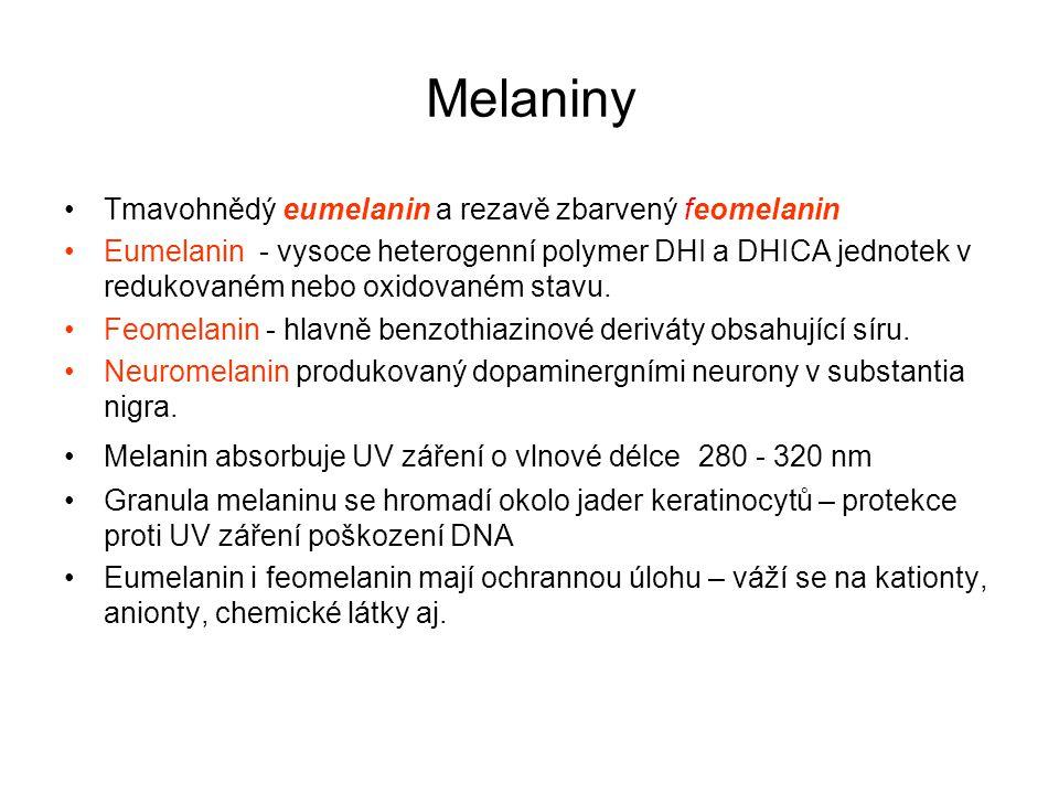Faktory ovlivňující tvorbu melaninů Fibroblasty kůže (a zřejmě i další buňky) - produkují cytokiny, růstové faktory, mediátory zánětu – zvýšení produkce melaninu v melanocytech a stimulace jeho přenosu do keratinocytů.
