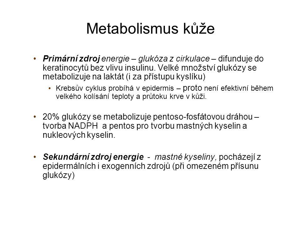 Metabolismus kůže Metabolismus lipidů - komponenty: a) membrán, b) hlavní složka kožní bariéry, c) zdroj energie Lipogeneze probíhá ve všech vrstvách epidermis, syntéza mazu v mazových žlázách z lipidů z cirkulace Odbourávání – pomocí lipáz