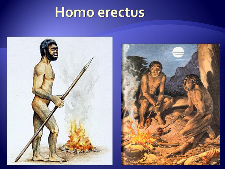 ČLOVĚK MOUDRÝ (HOMO SAPIENS)  vyvinul se v Africe asi před 200 tis.