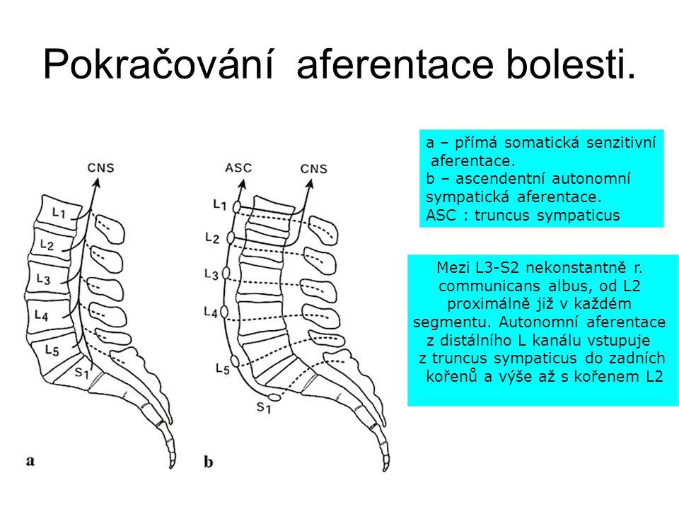 Aferentace bolesti.Zadní míšní kořen. Zadní míšní rohy ( nikoli provazce ).
