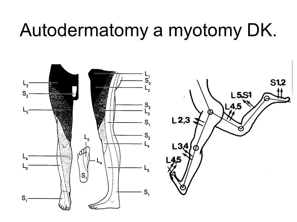 Autodermatomy x Headovy refl. zóny.