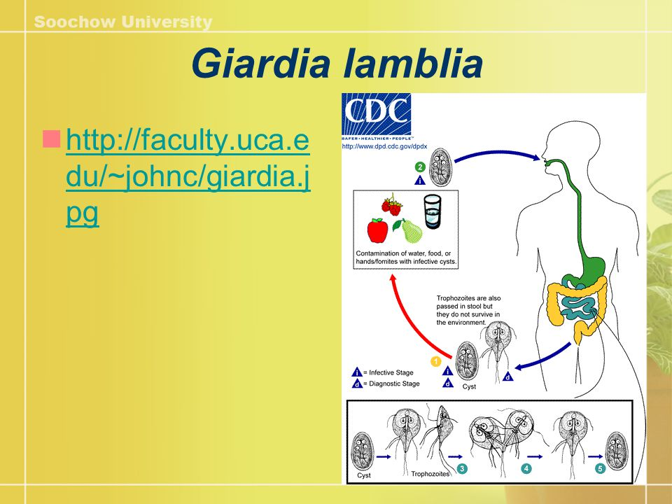Cryptosporidiosis 進食或飲用了受糞便污染的食物或水 , 或 透過接觸他人的 糞便 而傳播 隱孢子蟲病是由一種叫微小隱孢子蟲 ( Cryptosporidium parvum ) 所引起的傳染 病,而其他品種的隱孢子蟲亦偶然會引起 此病。病徵 通常於感染後 7 天左右出現, 包括腹痛、水瀉、嘔吐及發熱。大部份患 者的病 徵 持續 6 至 10 天 http://www.travelhealth.gov.hk/tc_chi/travel_related_diseases/cryptosporidiosis.html