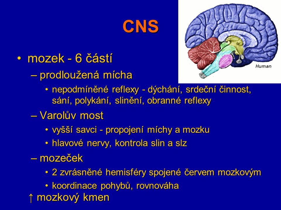 CNS mozek - 6 částímozek - 6 částí –střední mozek zrak a sluch, pohyb očízrak a sluch, pohyb očí –mezimozek vnitřní orgány, teplota těla, hospodaření s vodou, pohlavní žlázy, spánekvnitřní orgány, teplota těla, hospodaření s vodou, pohlavní žlázy, spánek hypofýza (podvěsek mozkový), epifýza (šišinka) - produkce hormonůhypofýza (podvěsek mozkový), epifýza (šišinka) - produkce hormonů –koncový mozek 2 hemisféry - vazník (kalózní těleso)2 hemisféry - vazník (kalózní těleso) šedá kůra mozková (2-6 mm, konečný počet b.)šedá kůra mozková (2-6 mm, konečný počet b.) rýhy a mozkové závityrýhy a mozkové závity