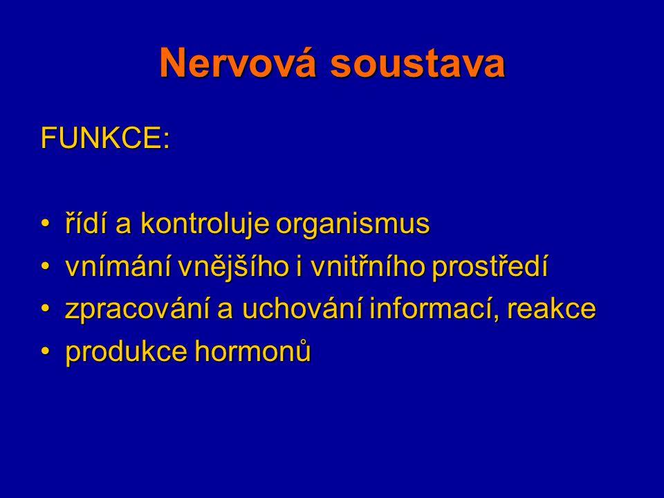 STAVBA: centrální nervový systém (CNS)centrální nervový systém (CNS) = mozek + mícha periferní nervový systémperiferní nervový systém = nervy a uzliny neuronneuron = tělo + dendrity + neurit (axon) - myelinová pochva - nervová synapse - s.