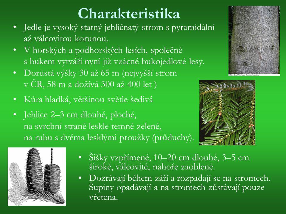 Smrk ztepilý (Picea abies) Olistění: jehličnaté, stálezelené Výška: v rozmezí 30 - 40 m Šířka: v rozmezí 20 - 30 m