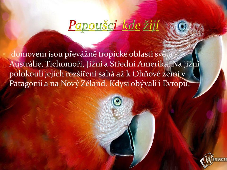 Papoušci žijí v tropických oblastech Mají velmi silný zobák Potrava je ve směs rostlinného původu, i když sbírají také hmyz, zvláště v období krmení mláďat.