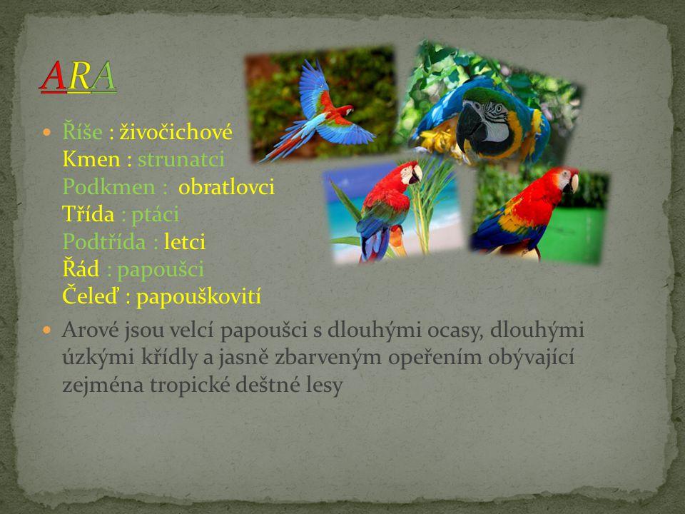 Říše : živočichové Kmen : strunatci Podkmen : obratlovci Třída : ptáci Řád : papoušci Čeleď : papouškovití je malý papoušek původem z Austrálie.
