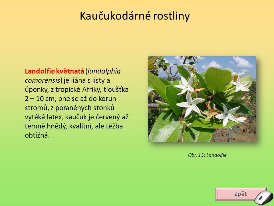 Zpět Perčovník pravý (Palaquium gutta) je strom 10 – 30 m, ø 1 m z Indie a jihovýchodní Asie, latex obsažen v kůře, dřevu i listech, má stejné složení jako přírodní kaučuk ale jiné sterické uspořádání (trans izomer).