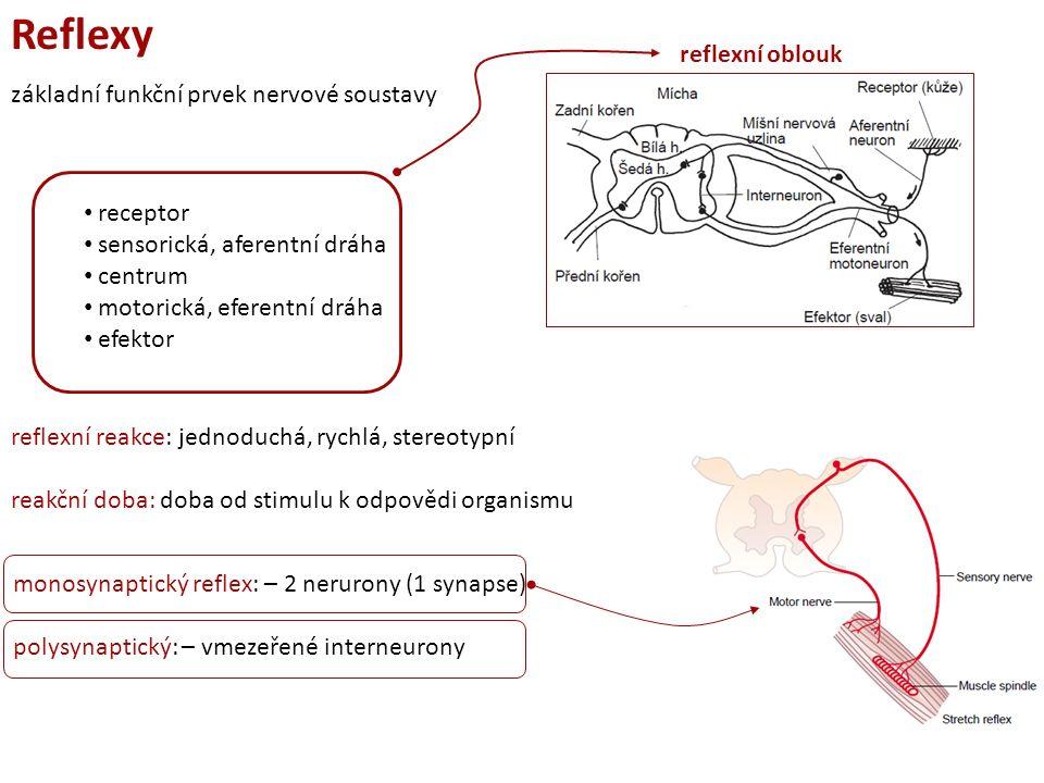 Reflexy II Nepodmíněné reflexy vrozené, geneticky kódované centrum v míše ochranné, novorozenecké, zornicový, patelární… Podmíněné reflexy nepodmíněný podnět (jídlo)nepodmíněná reakce (slinění) spojení podmíněného podnětu (zvonek) s nepodmíněným (slinění v přítomnosti potravy) zvonění slinění i bez přítomnosti jídla centrum v kůře mozku získané, forma učení, dráha není trvalá vyhasínání