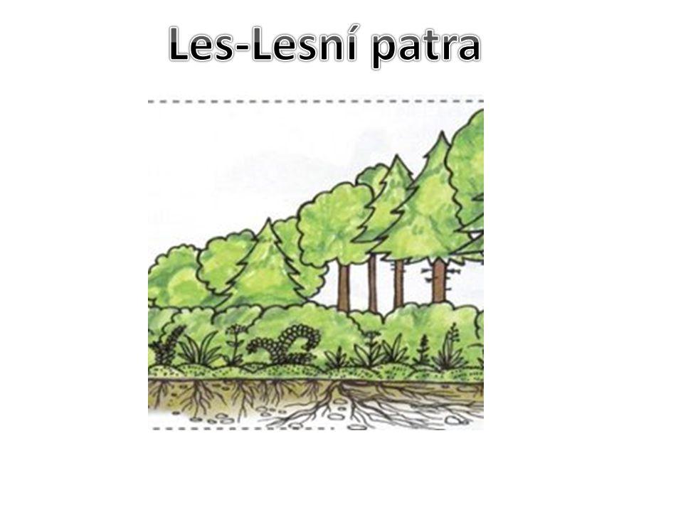 Les-Lesní patra