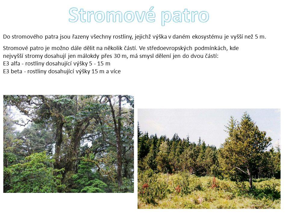 Stromové patro Do stromového patra jsou řazeny všechny rostliny, jejichž výška v daném ekosystému je vyšší než 5 m.